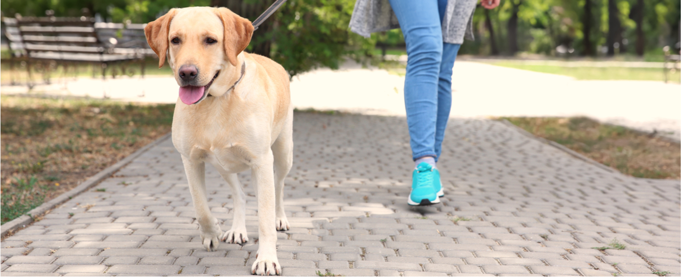 A pet-owner copes with stress by walking her dog