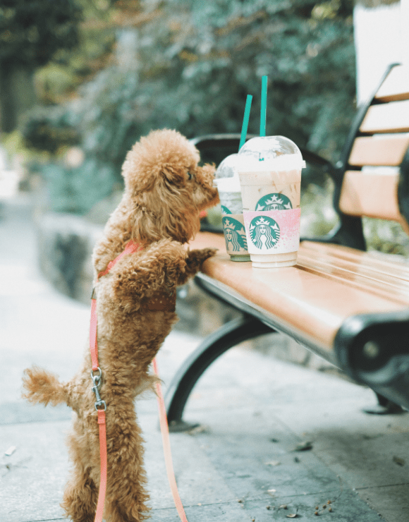 Small dog sniffing a plastic container of coffee